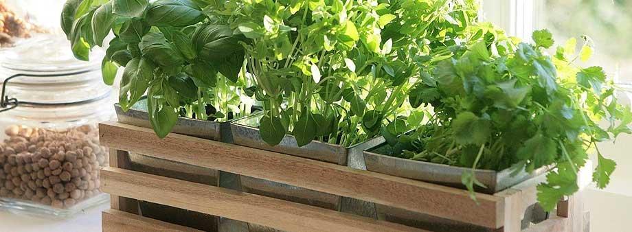 Какие растения можно выращивать дома на подоконнике?