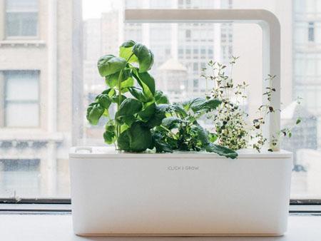 «Умный» цветочный горшок Click and Grow