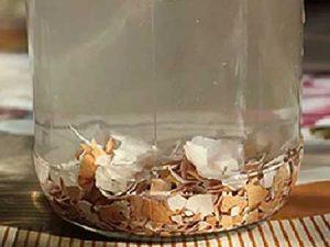 Настой из яичной скорлупы