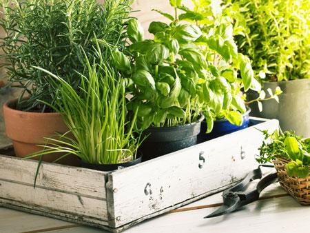 польза зелени, выращенной в домашних условиях