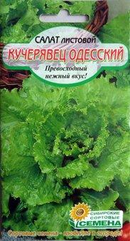 салат листовой одесский кучерявец
