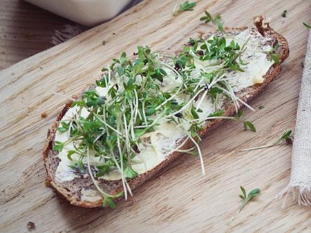 бутерброд с микрозеленью