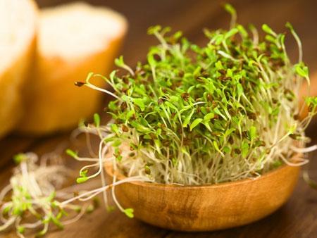 польза ростков льна