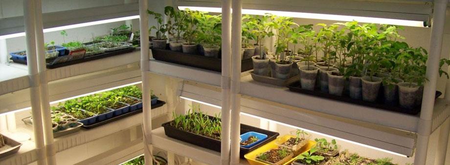 стеллажи для выращивания зелени