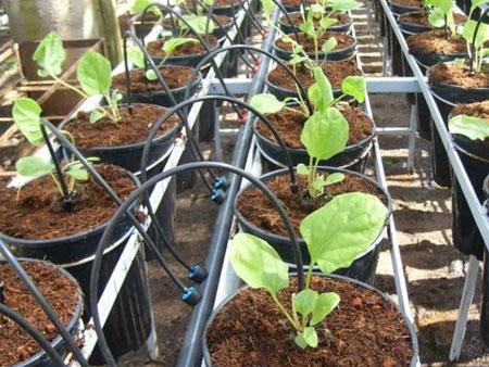 кокосовый субстрат для выращивания зелени
