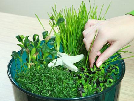 микрозелень в проращивателе