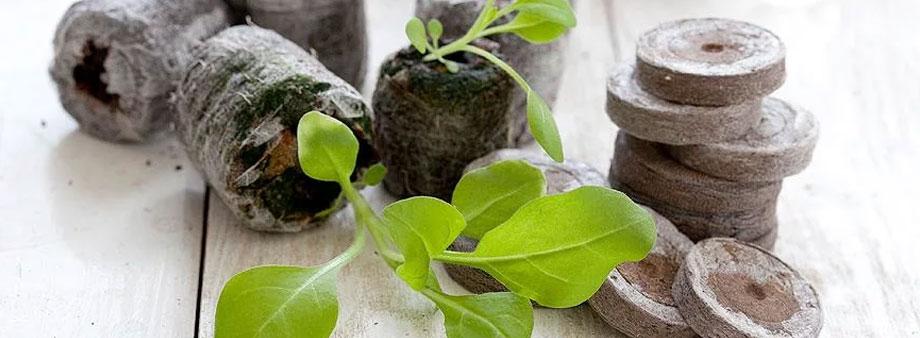 ростки на торфяных таблетках