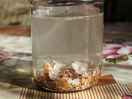 Удобрения для рассады из яичной скорлупы