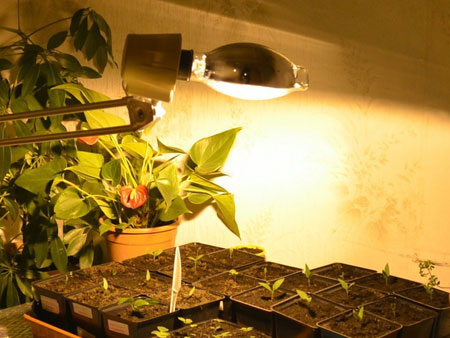 Газоразрядные натриевые лампы для рассады перца