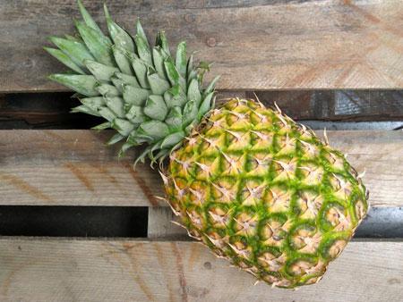 Выбор ананаса для посадки