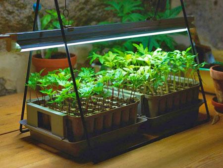 Фитолампа для выращивания рассады