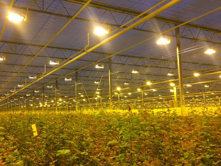 Натриевые лампы для растений