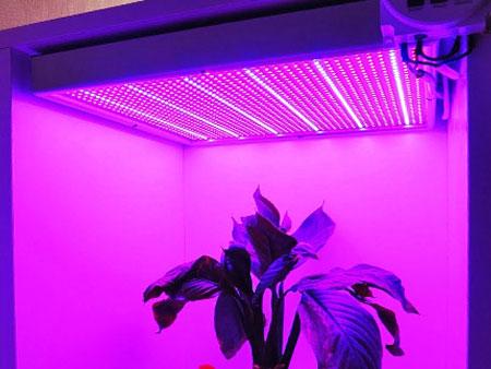 Облучение банана ультрафиолетовой лампой