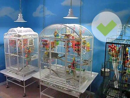 Фитолампы для птиц