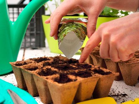 Выращивание семян в домашних условиях